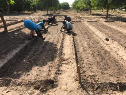 Irrigation in Senegal